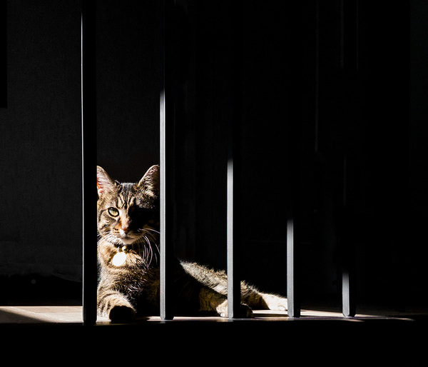 Behind Bars